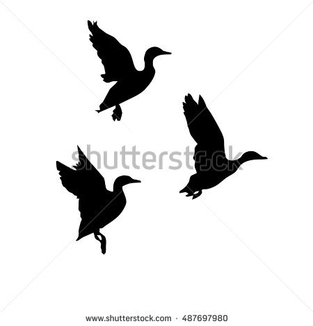 Flying Ducks Stock Images, Royalty.