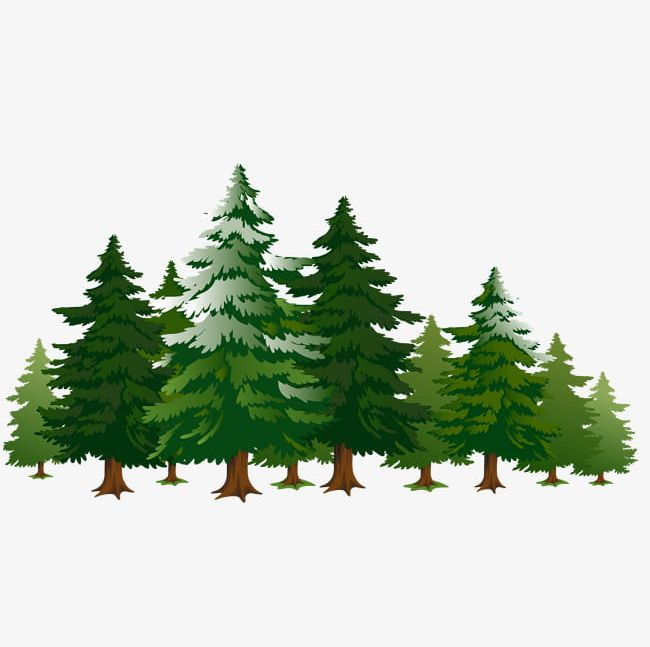 A Row Of Pine Trees PNG, Clipart, Biome, Branch, Cartoon.