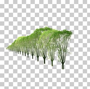 Row Of Trees PNG Images, Row Of Trees Clipart Free Download.