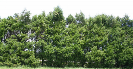 Row of trees png » PNG Image.