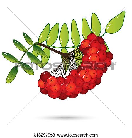 Clipart of Bunch of red rowan berries with leaves isolated on.