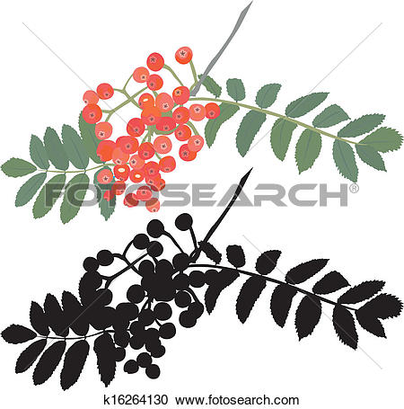 Clipart of rowan berry branch stencil k16264130.