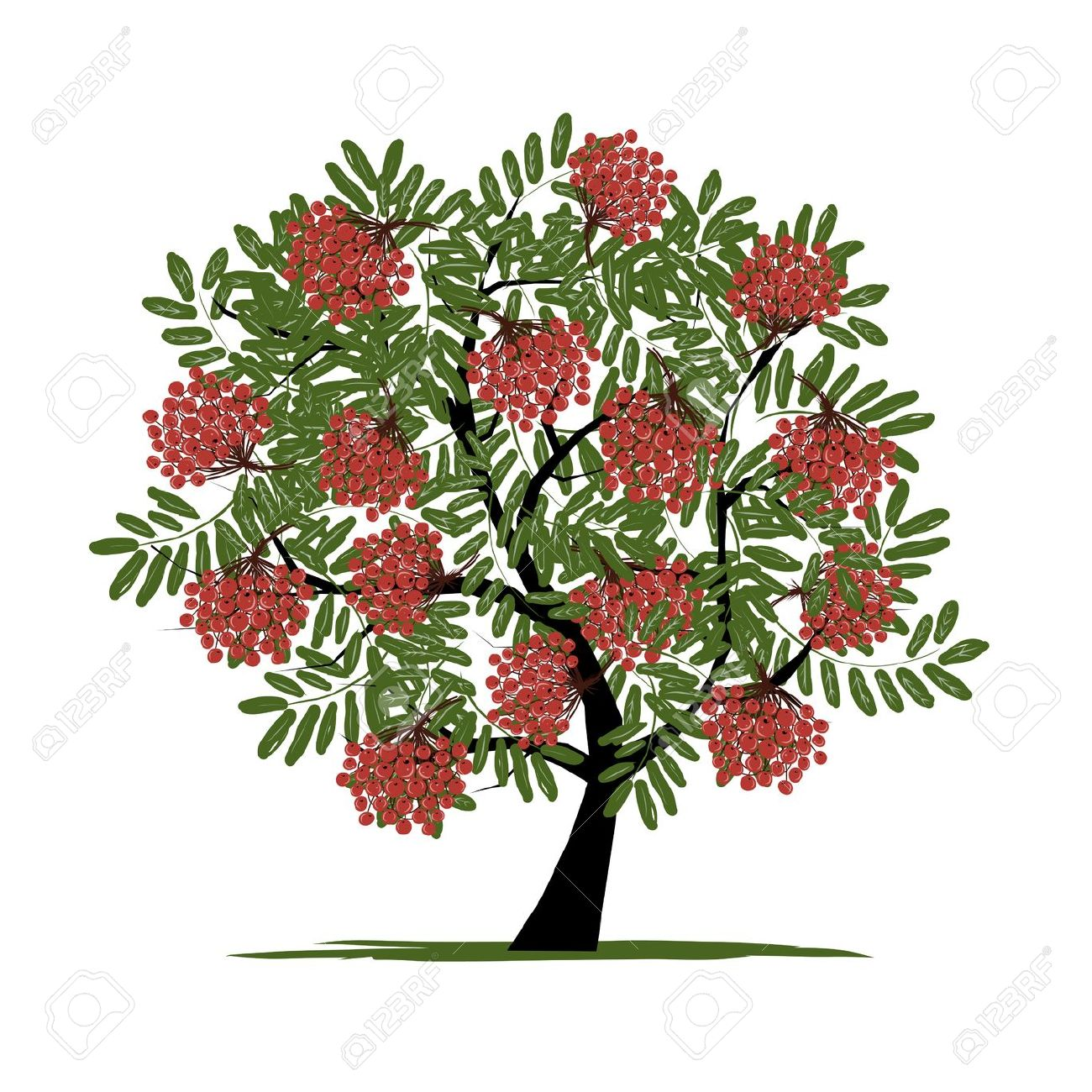 4,348 Rowan Tree Cliparts, Stock Vector And Royalty Free Rowan.