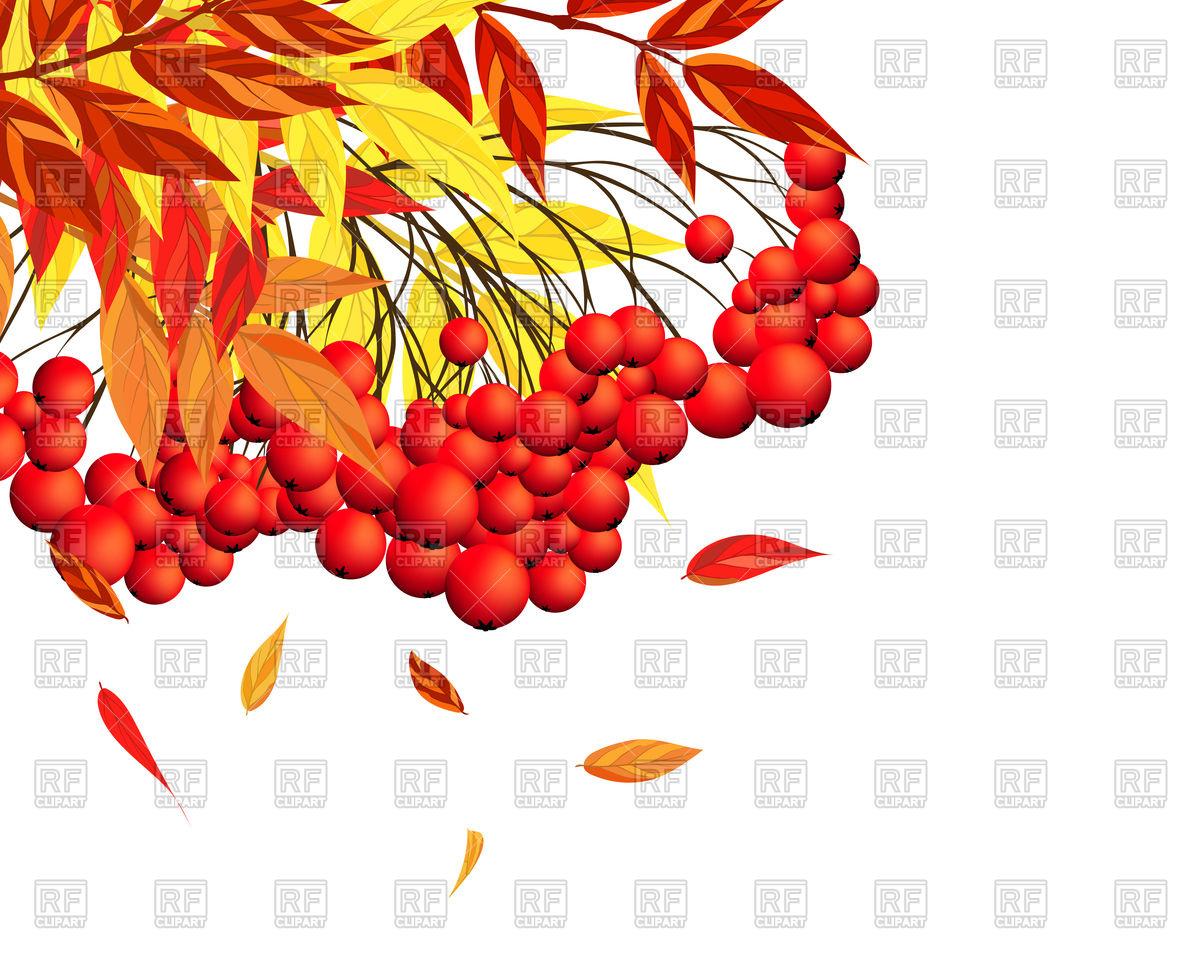 Rowan autumn background Vector Image #110307.