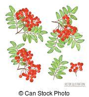 Rowan Clipart and Stock Illustrations. 3,055 Rowan vector EPS.