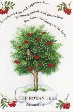 Rowan tree clipart.