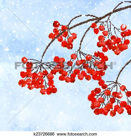 Clip Art of Winter background with branches rowan berry k23726686.