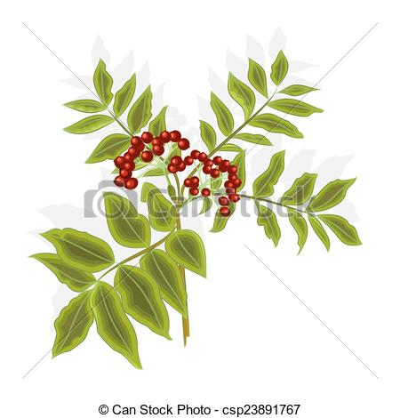 Clip Art Vector of Twig rowan berry with leaves and berries.