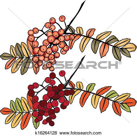 Clip Art of Autumn rowan berry branch k16264128.