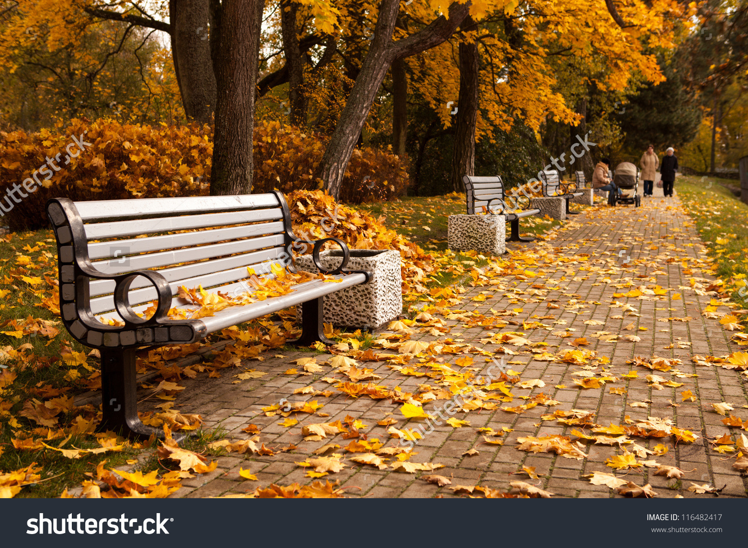 Perspective Row Benches Autumn Park While Stock Photo 116482417.