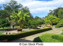 Stock Photographs of Royal Botanical Garden of Sydney.