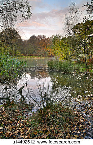 Stock Photo of England, Gloucestershire, Cinderford, An autumn.
