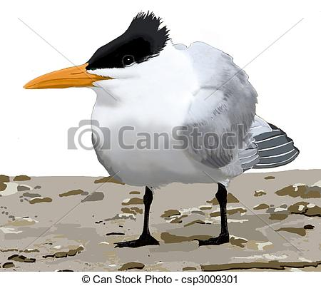 Clipart of Royal Tern.