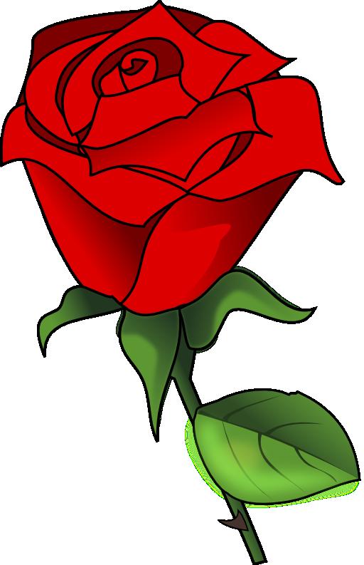 Rose clipart garden rose, Rose garden rose Transparent FREE.
