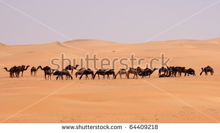 Camels Rub Al Khali Empty Quarter Stock Photo 60345748.