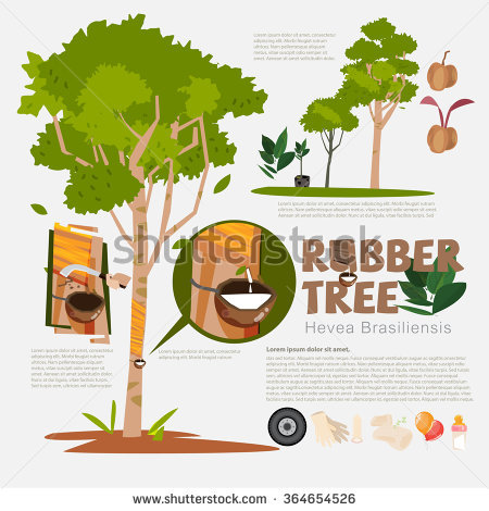 Rubber Tree Stock Images, Royalty.