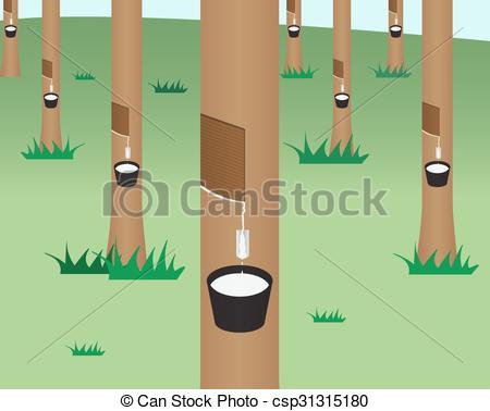 Rubber tree Illustrations and Clip Art. 812 Rubber tree royalty.