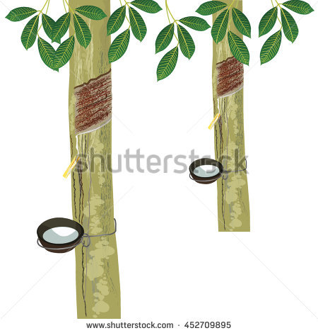 Rubber Tree And Leaf Stock Vector Illustration 452709895.
