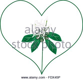 Love Concept, Illustration Of White Rubiaceae Flowers Or White.