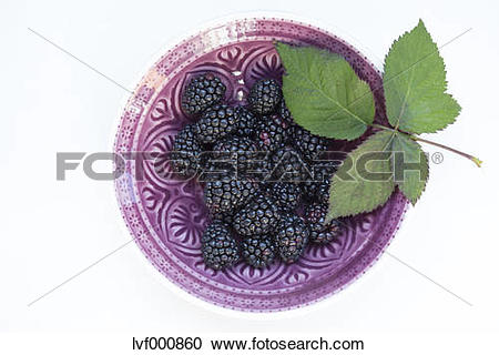 Stock Photography of Bowl of blackberries (Rubus sectio Rubus) and.