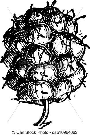 Clip Art Vector of Common Blackberry or Rubus fruticosus, vintage.