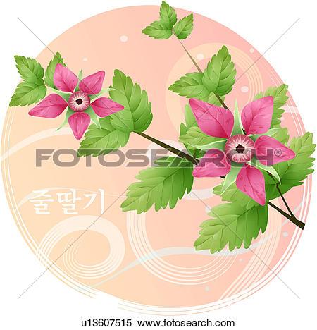 Clipart of flowers, rubus oldhamii, flower, plants, plant.