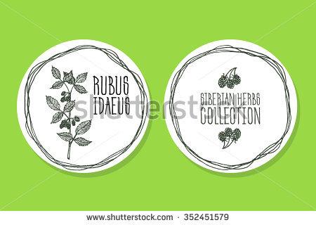 Rubus Idaeus Stock Photos, Royalty.