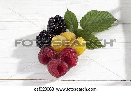 Pictures of Yellow and red raspberries (Rubus idaeus) and.