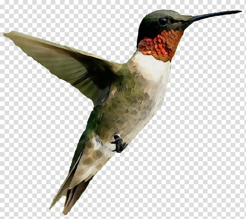 Water, Bird, Trochilinae, Rubythroated Hummingbird, Rufous.