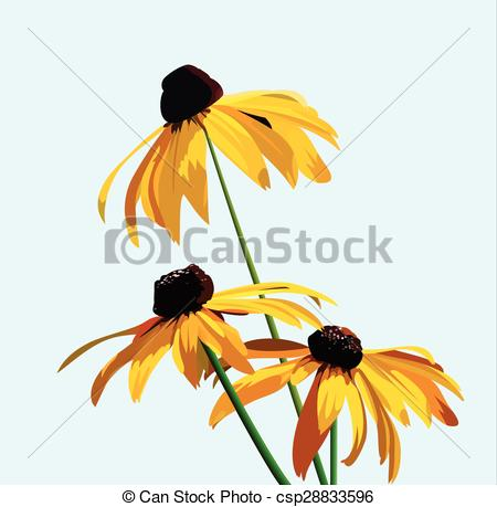 EPS Vectors of flower rudbeckia.