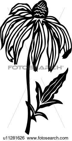 Clip Art of , flower, rudbeckia, varieties, u11281626.