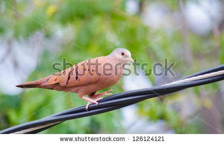 Doves At Aviary Stock Photos, Royalty.