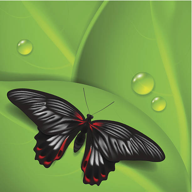Papilio Rumanzovia Clip Art, Vector Images & Illustrations.