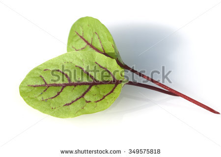 Rumex Stock Photos, Royalty.