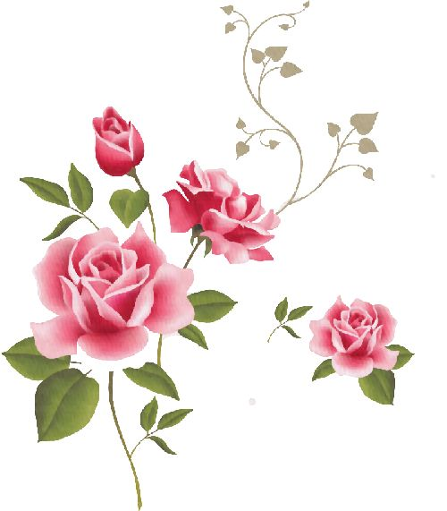 1000+ images about Rosas Roses on Pinterest.