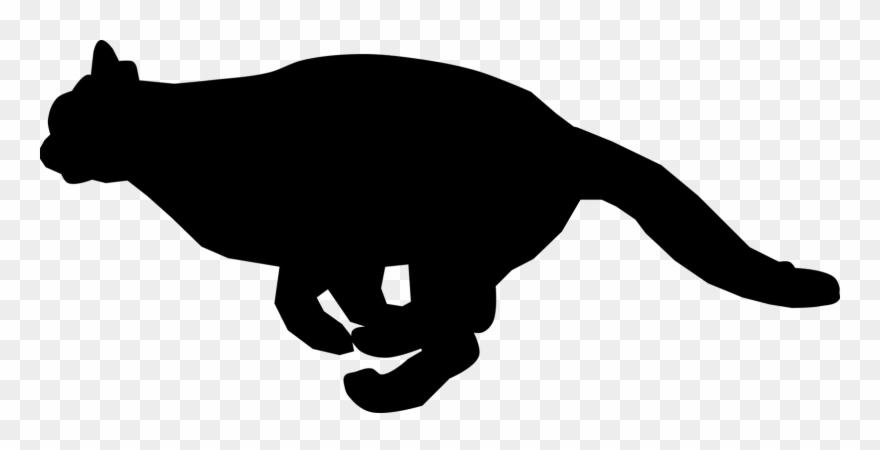 Black Cat Kitten Felidae Running.