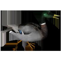 Running Duck Clip Art.