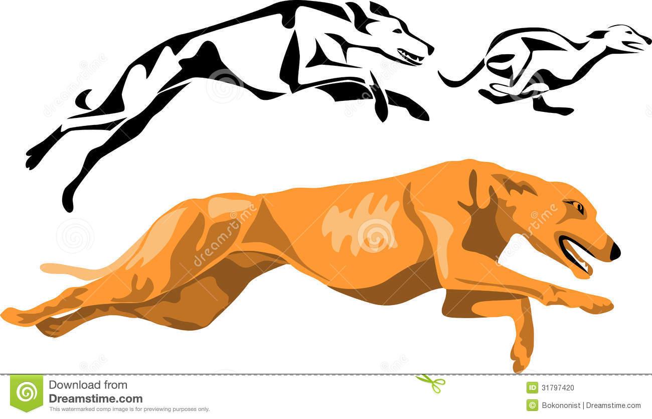 Greyhound Stock Photo.