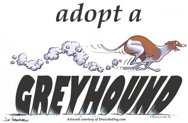 Greyhound Dog Running Speed Greyhound Wikipedia The Free.
