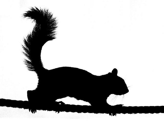 Squirrel silhouette 2.