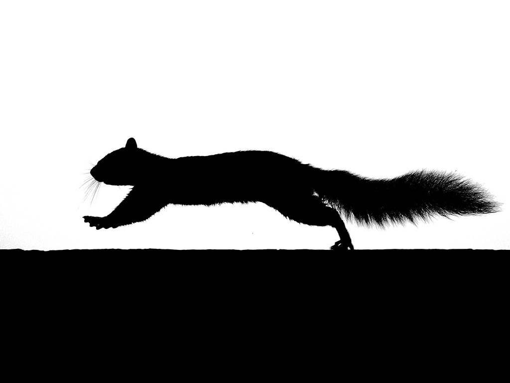 Running Squirrel Silhouette Flickr Photo Sharing.