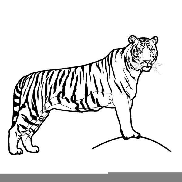 Running Tiger Clipart.