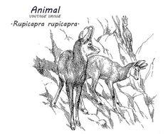 Mountain goat clip art. Stock image. Digital vintage graphical art.
