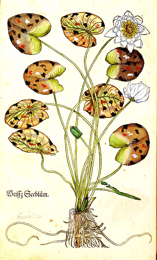 Plants and Gardens Portrayed: Rare and Illustrated Books from The.
