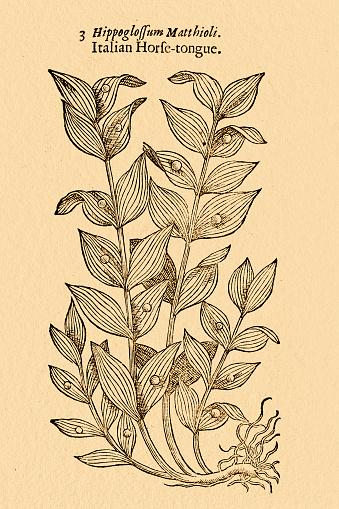 Ruscus Extract Clip Art, Vector Images & Illustrations.