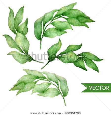 Ruscus Stock Vectors & Vector Clip Art.