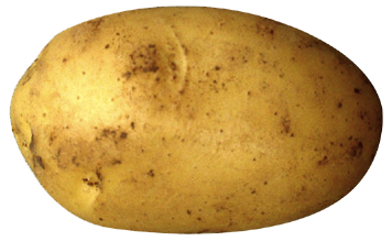 Potato PNG Transparent Images.