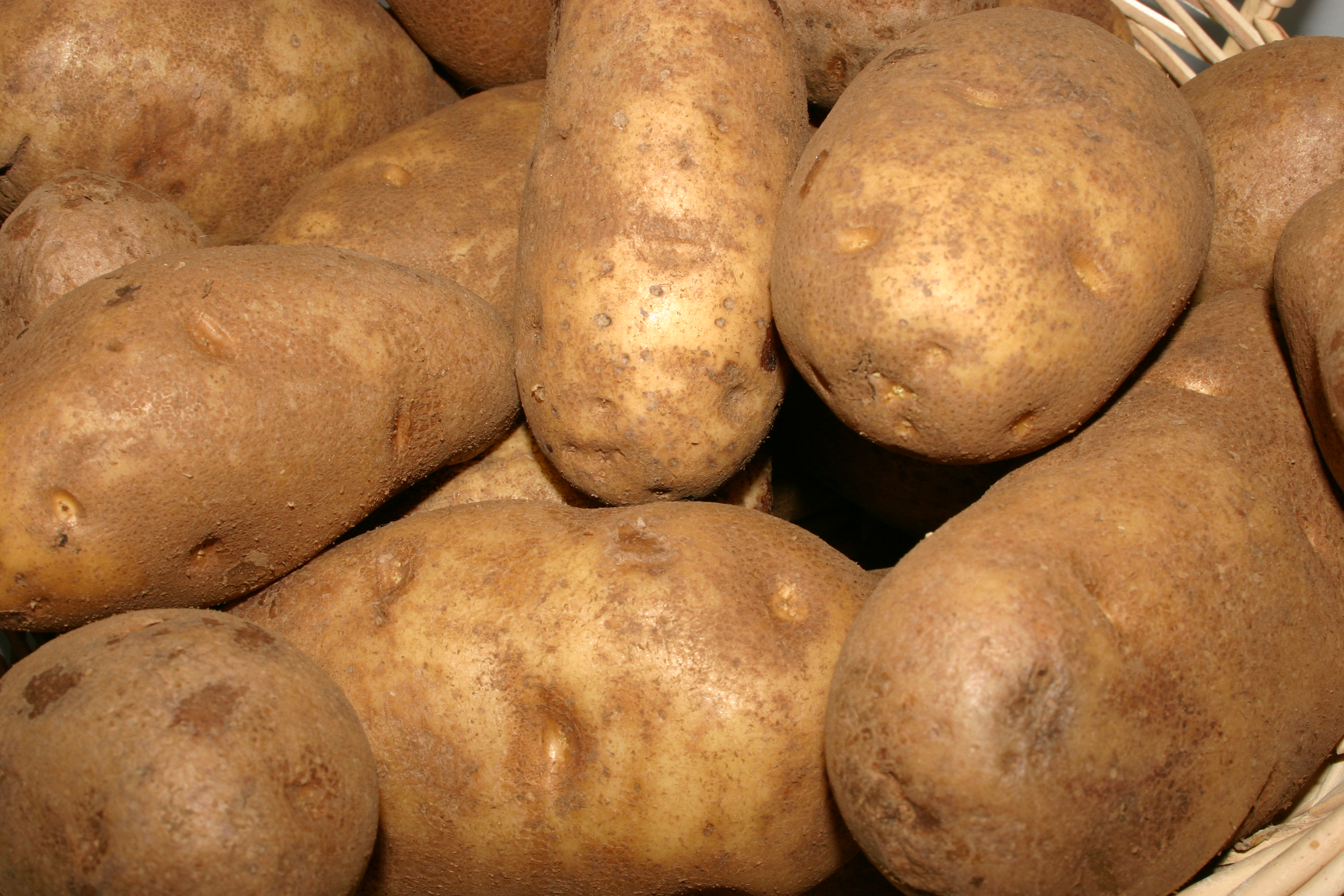 Potato texture background.