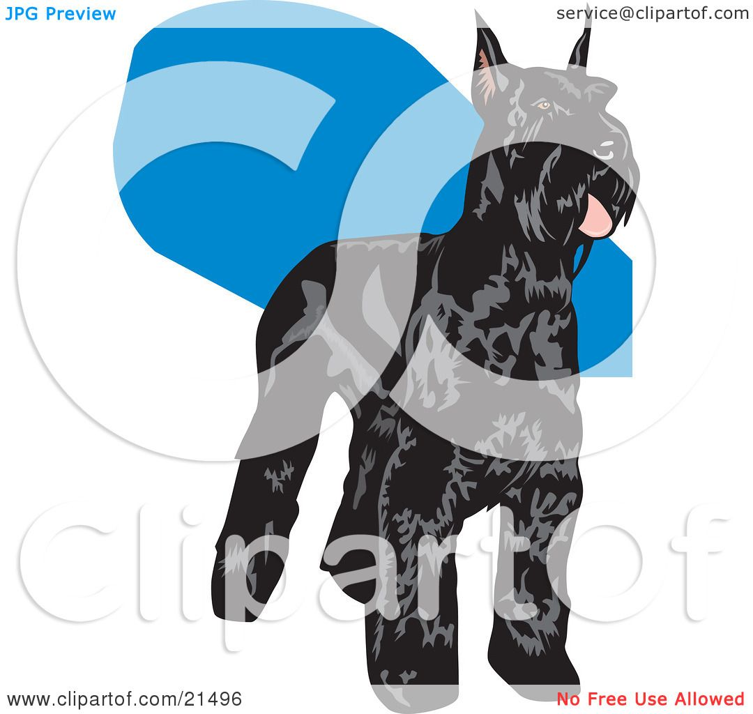 Clipart Illustration of a Black Schnauzer Dog With A Shiny Coat.