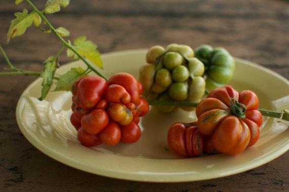 Heirloom Tomato Seeds.